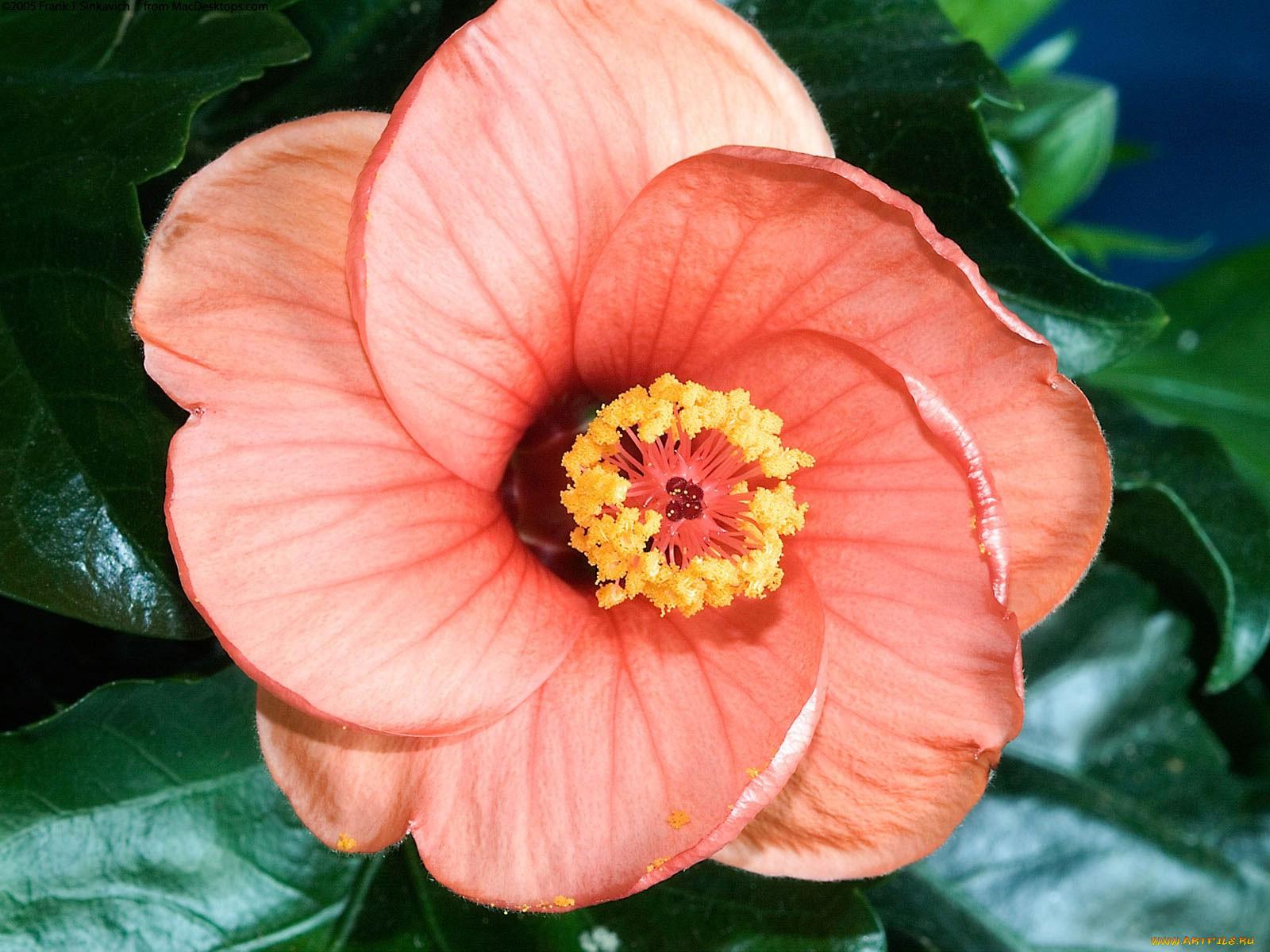 Все виды цветов без цветков
